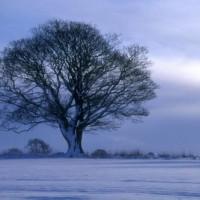 snow-tree-500-x-333