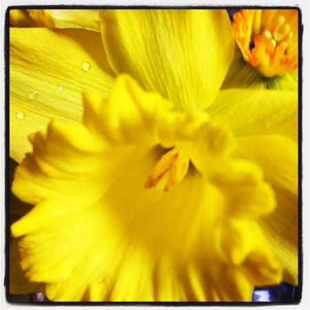 Spring Flowers 2012IMG_0569