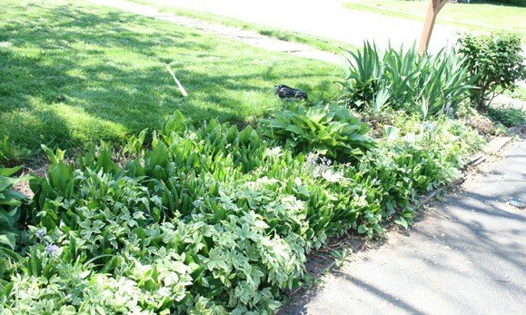 Photo of flower bed on the side of a driveway that has been somewhat overtaken by weeds - the before of a curb appeal makeover