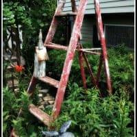 Garden LadderIMG_7112