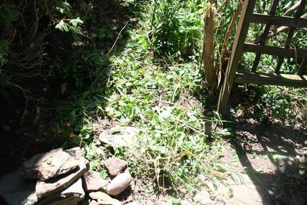 Arbor Path Before