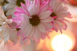 Fresh Flowers at cupcakesandcrinoline.com