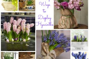 9-lovely-ways-to-display-hyacinths