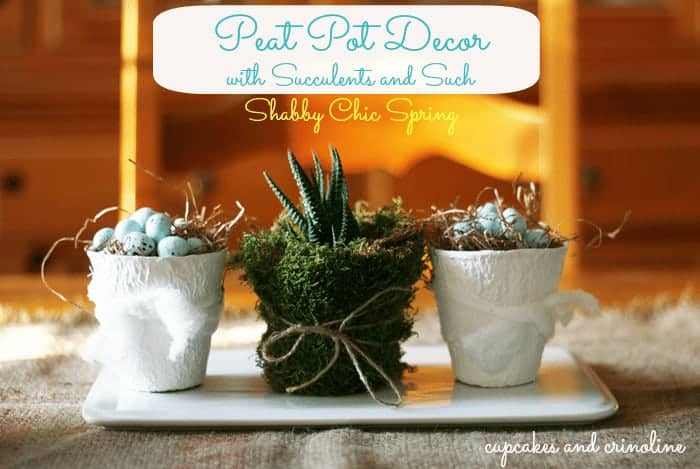 Peat Pot Succulents and Shabby Chic Spring