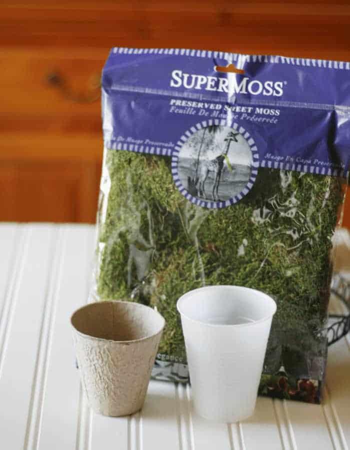 Peat Pot Planter for Succulents