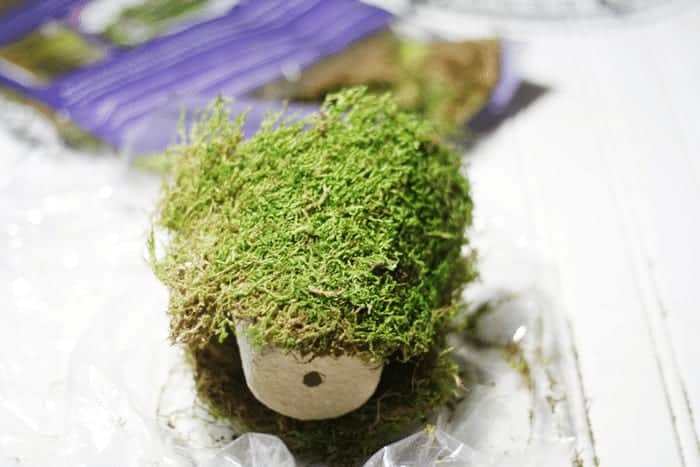 Peat Pots with Moss