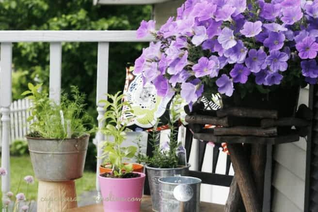 Herb Garden with petunias