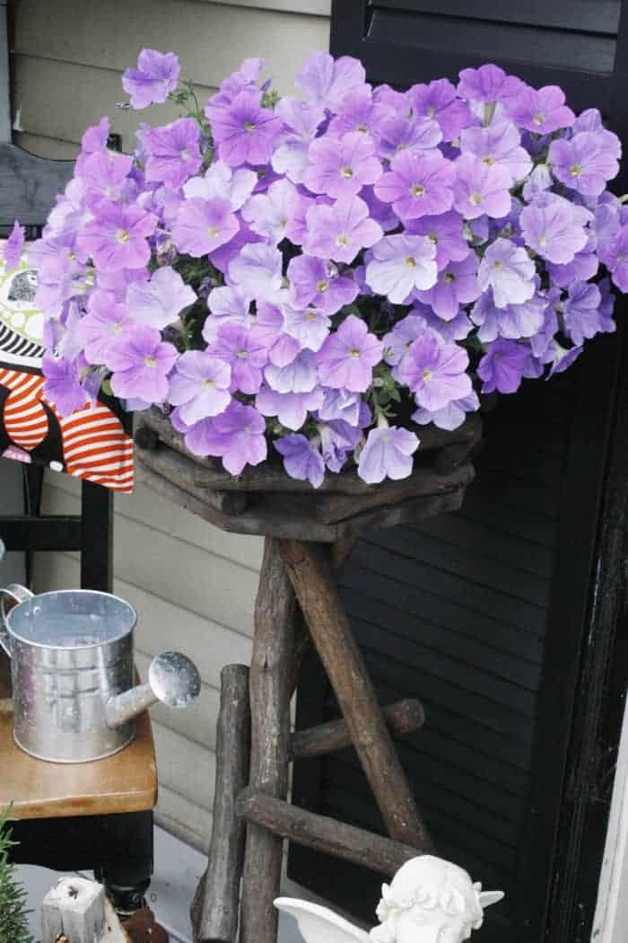Purple-Petunias Elements of Summer