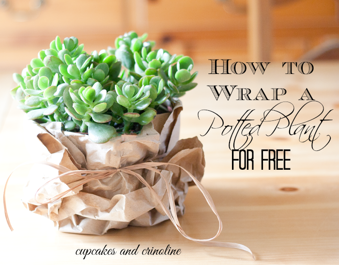 Beautiful live plant wrapped in recycled paper from deliveries and tied with brown twine