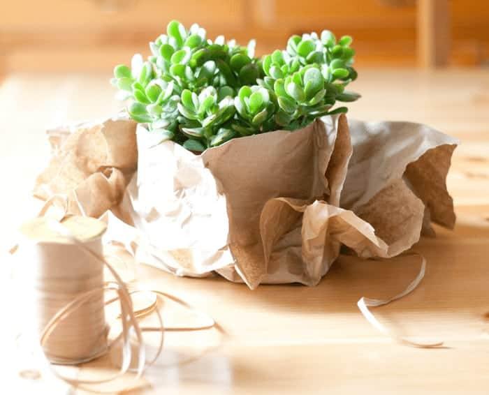 Plant Wrap8