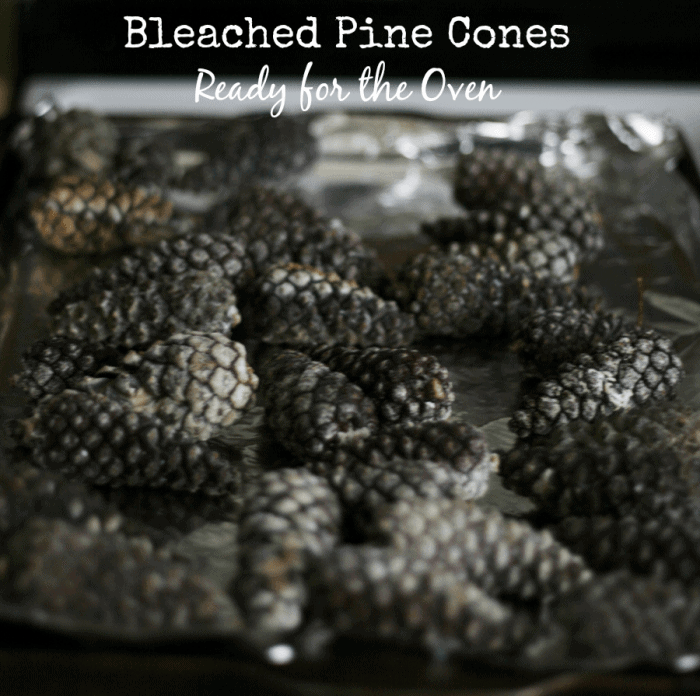 How to Bleach Pine Cones Oven Ready from cupcakesandcrinoline.com