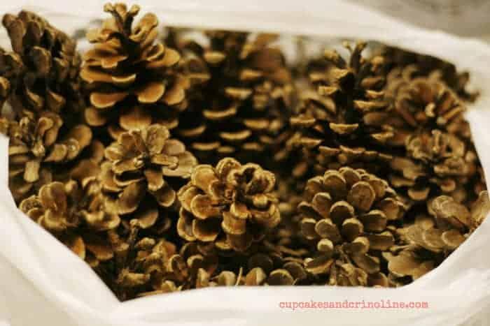 How to Bleach Pine Cones from cupcakesandcrinoline.com