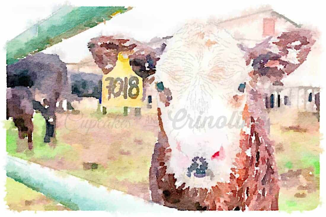 Watercolor Cow free printable download for joining bHome from cupcakesandcrinoline.com