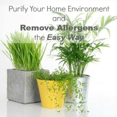 Purify your home environment and remove allergens the easy way from cupcakesandcrinoline.com