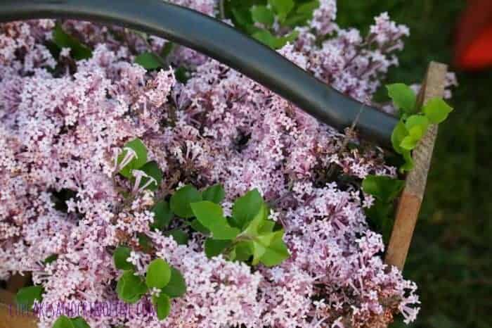 The Secret to Creating a Cozy and Charming Outdoor Space ~ french lilacs in a rustic wooden box cupcakesandcrinoline.com