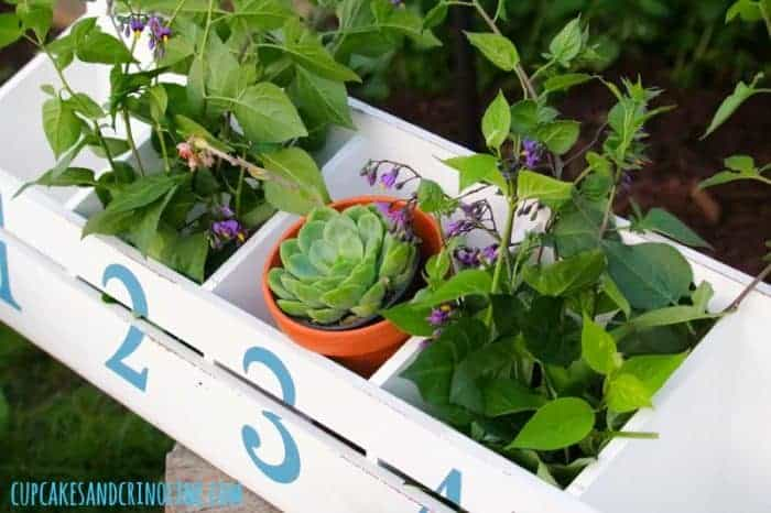 The Secret to Creating a Cozy and Charming Outdoor Space ~ white sectioned box with numbers ~ 1 through 5 ~ filled with succulents and vines ~ cupcakesandcrinoline.com