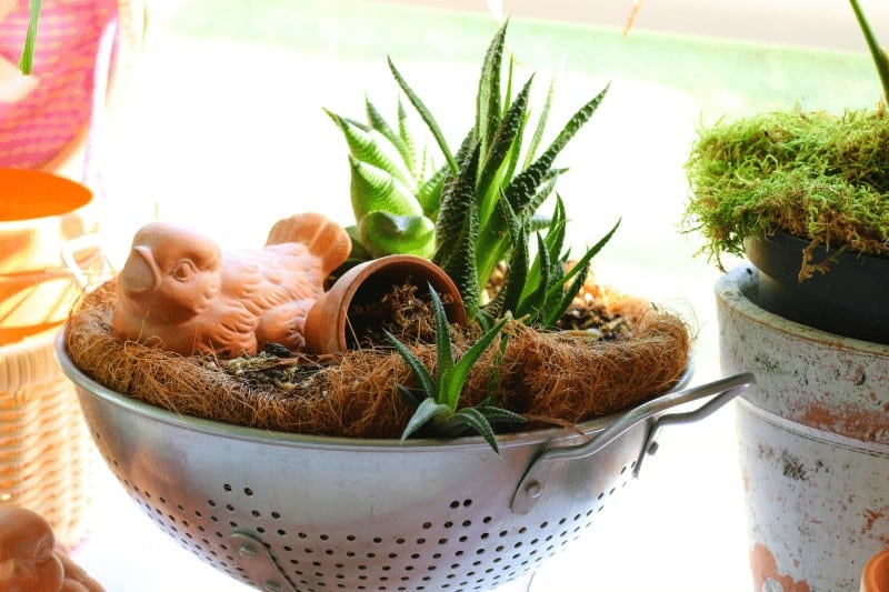 Vintage colander with succulents and terracotta bird ~ Vintage Decor Summer Open House at cupcakesandcrinoline.com