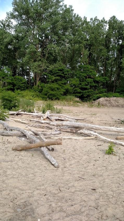 Lake Erie July 2015 Driftwood