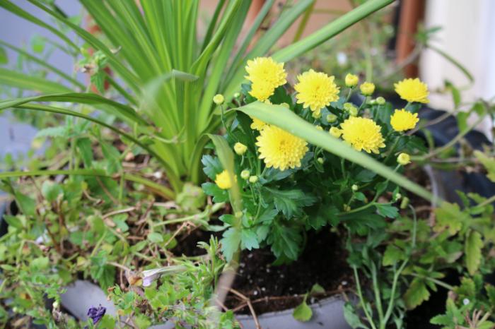 Summer weary planter - cupcakesandcrinoline.com