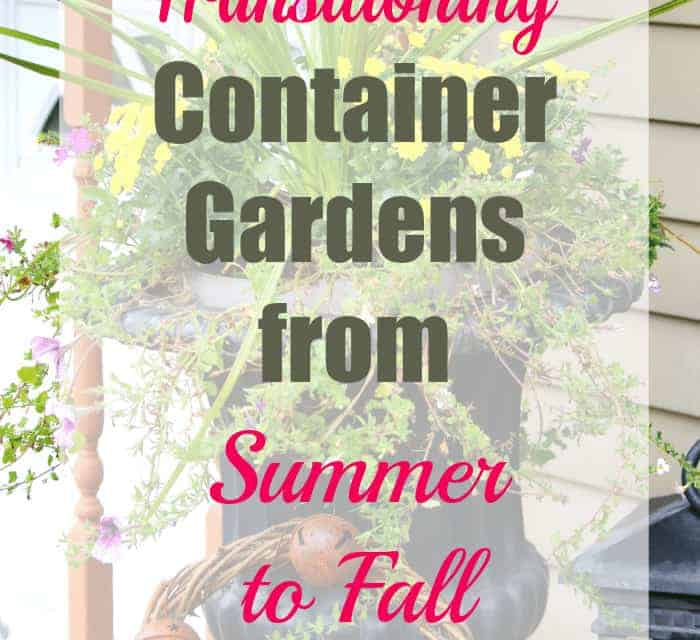 Tips for Transitioning Container Gardens From Summer to Autumn Displays