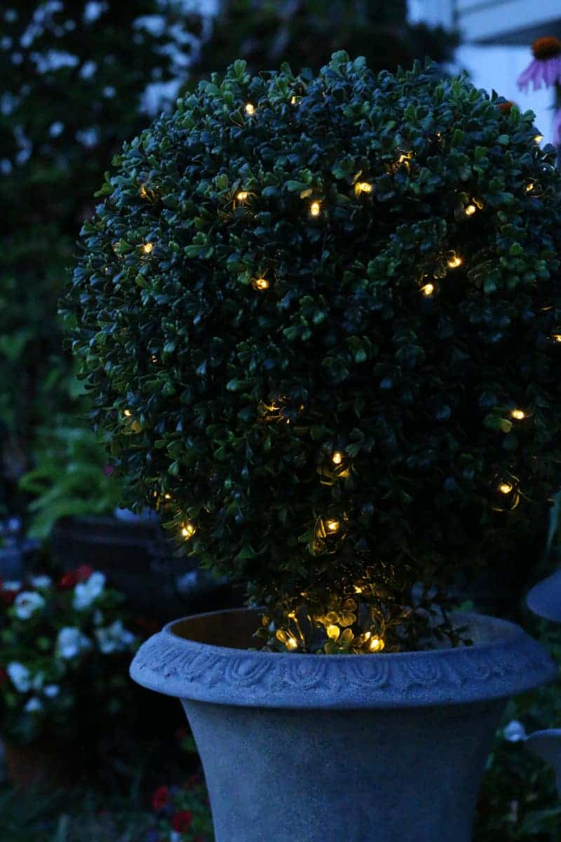 Faux boxwood topiary with lights