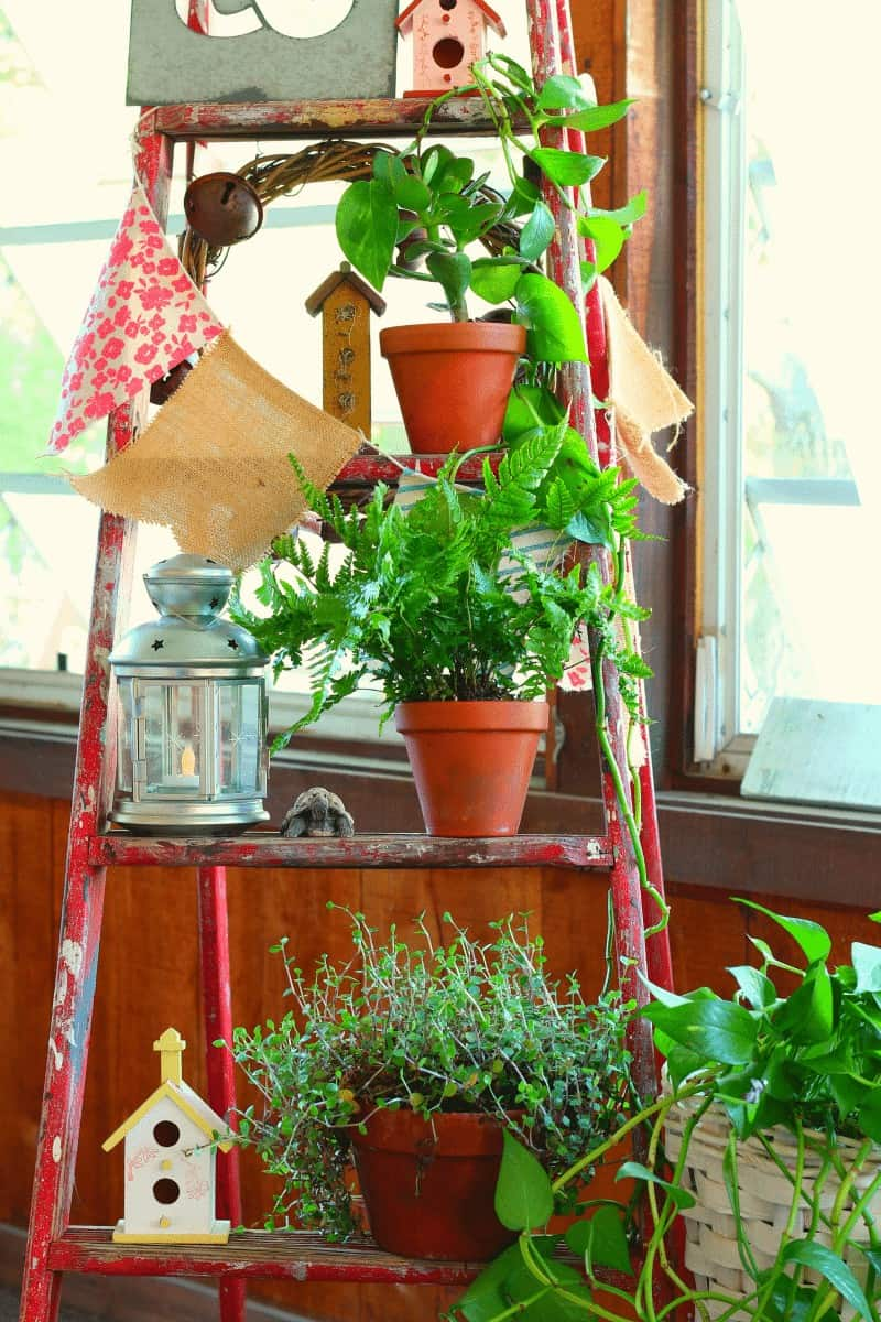 Decorate with a vintage wooden ladder - houseplant display - see more photos at cupcakesandcrinoline.com