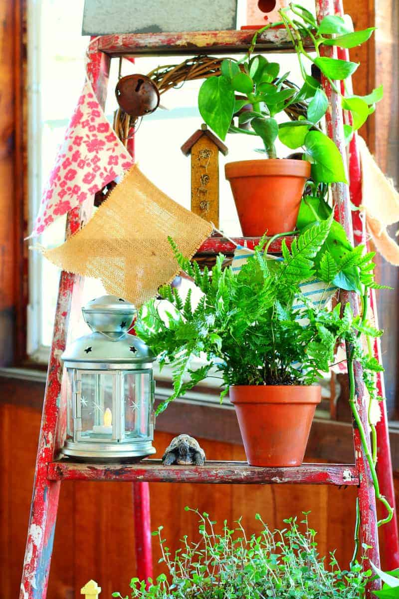 Decorating with a vintage wooden ladder - houseplant display. Find out more at cupcakesandcrinoline.com