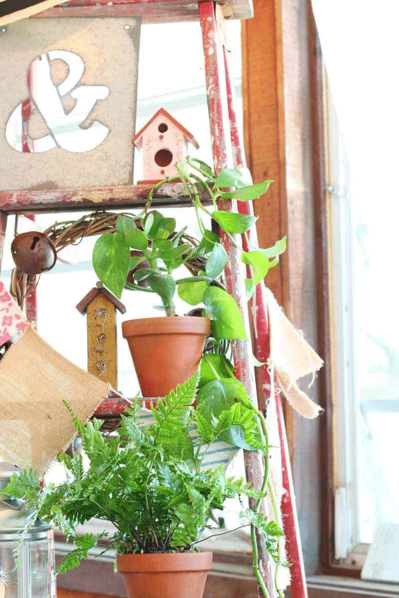 Vintage red wooden ladder with houseplants, birdhouses, lanterns and more on the ladder steps - see more photos at cupcakesandcrinoline.com
