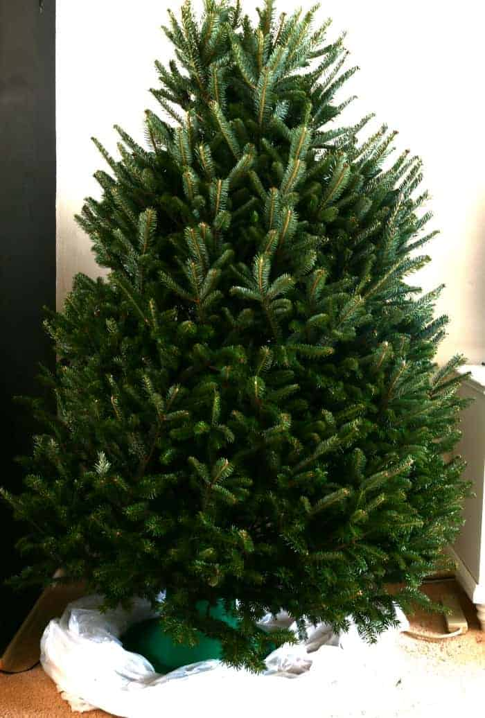 give-your-fresh-cut-tree-a-chance-to-relax-adn-fluff-iteself-the-next-morning-www-cupcakesandcrinoline-com