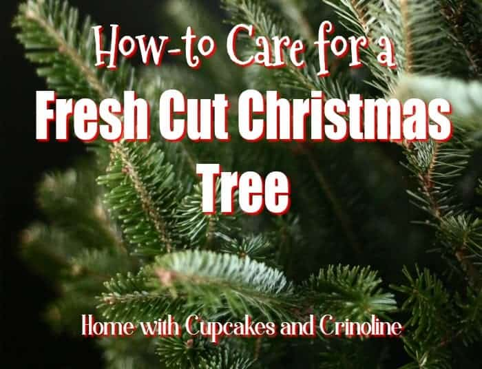 how-to-care-for-a-fresh-cut-christmas-tree-at-home-with-cupcakes-and-crinoline-700-x-536