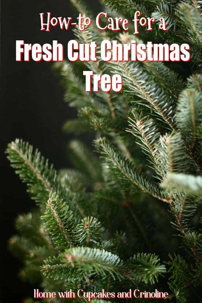 how-to-care-for-a-fresh-cut-christmas-tree-from-home-with-cupcakes-and-crinoline
