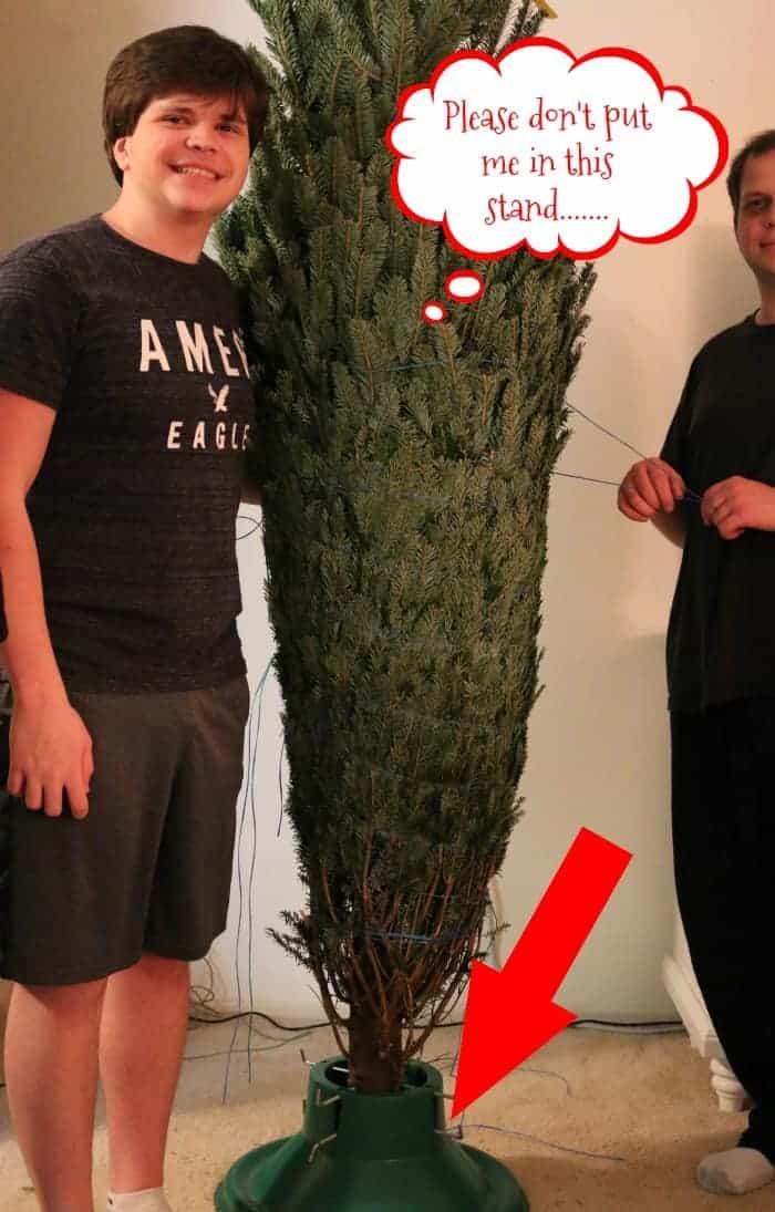 tree-ready-to-unwrap
