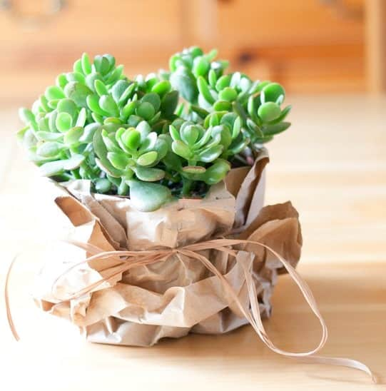 Upcycled packing paper - wrap a plant for gift giving