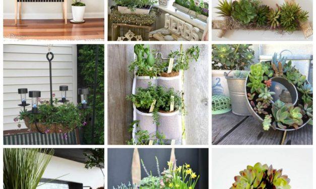 9 Pretty and Creative Plant Ideas