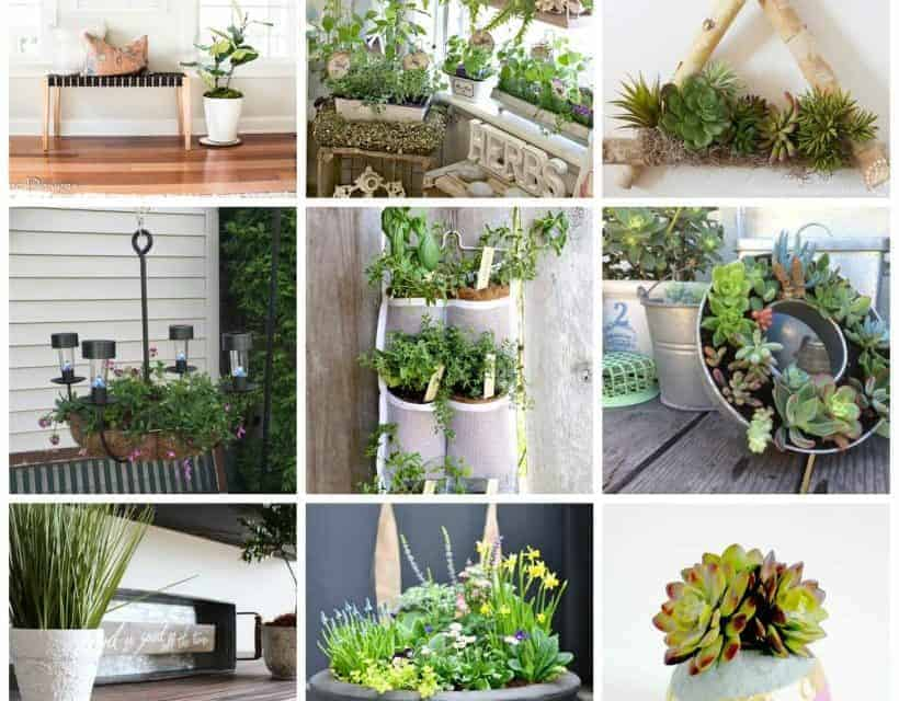 9 Pretty and Creative Plant Ideas
