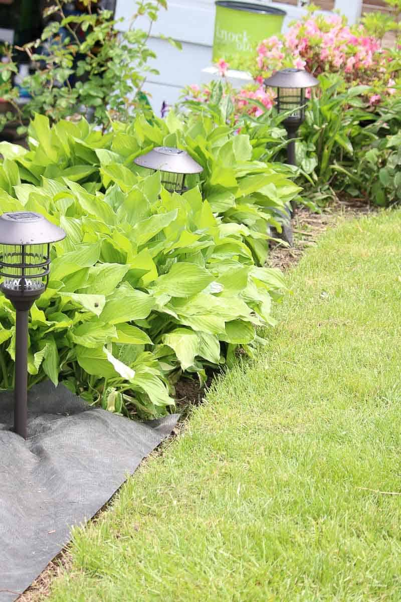 Nicely edged flower bed with hostas, garden fabric, and solar lighting
