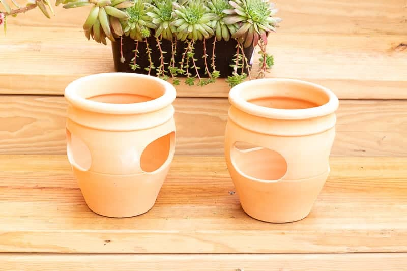 Two terra cotta strawberry pots in front of a plastic basket of hens and chicks