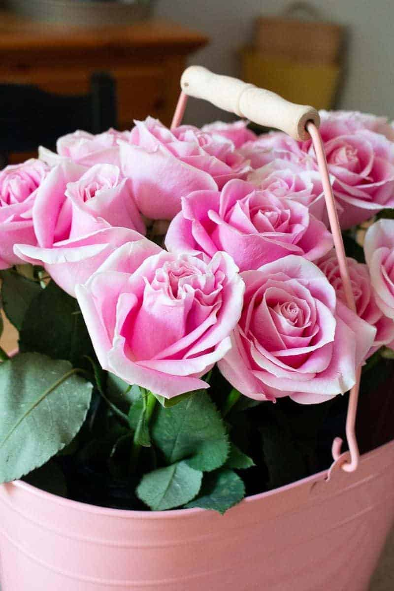 How to arrange flowers - Side view of pink roses in a pink bucket
