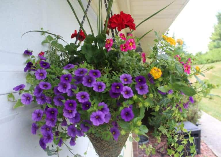 beautiful hanging basket of flowers