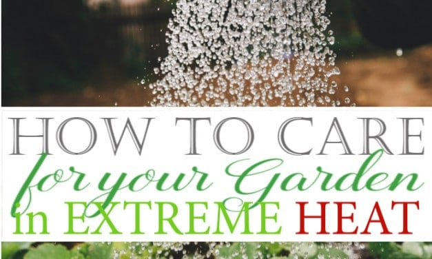 How to Care for Your Garden in Extreme Heat