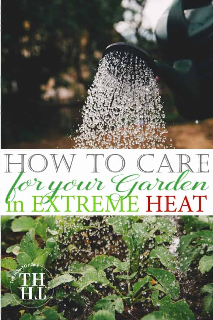 How to care for your garden in extreme heat - photos of a watering can gently watering fresh vegetable plants