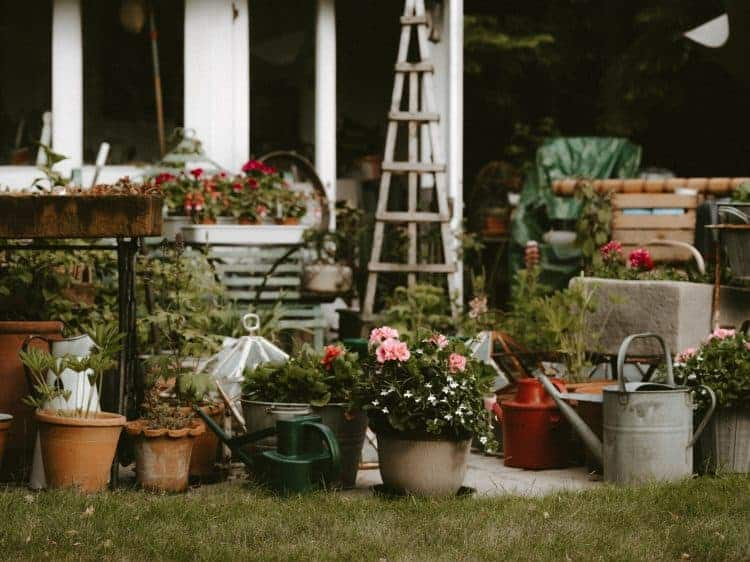 How to care for your garden in extreme heat - beautiful and shabby chic potted plants outdoors and blooming