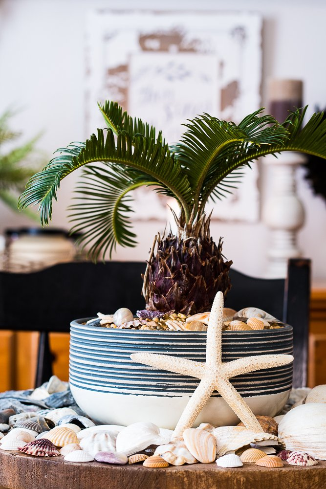 Baby palm tree in the center of a display of colorful seashells for a seashell centerpiece